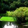 Kirstenbosch 37