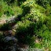 Kirstenbosch 41.JPG