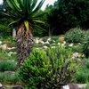 Kirstenbosch 36