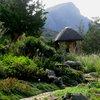 Kirstenbosch 32