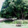 Kirstenbosch 33