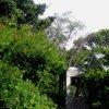 Kirstenbosch 47.JPG