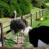 Table Mountain National Park 44.JPG