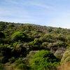 Table Mountain National Park 42.JPG