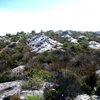 Table Mountain National Park 30