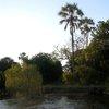 Zambezi 07