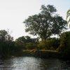 Zambezi 06