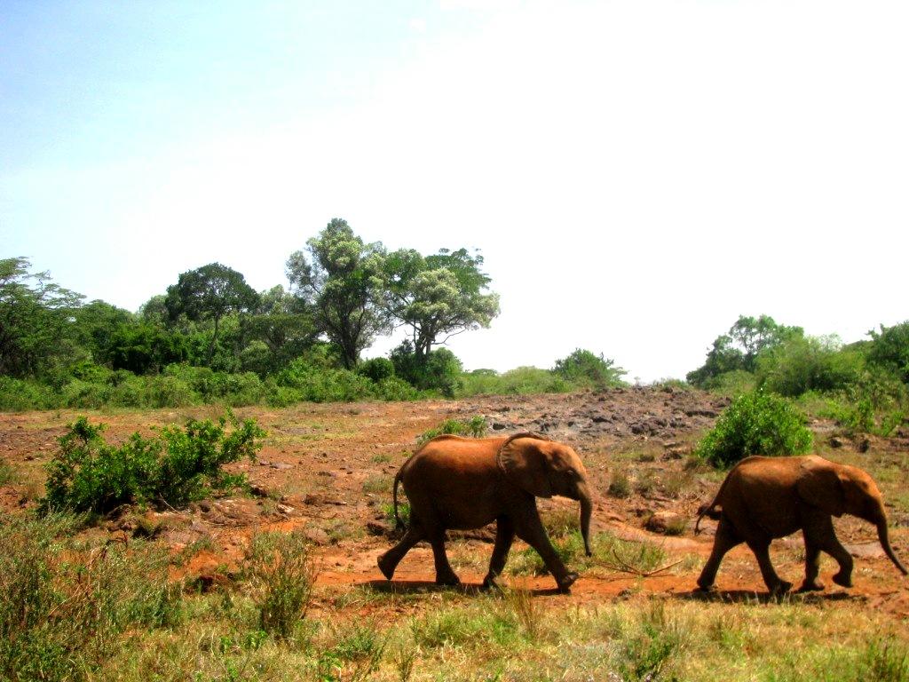 Sheldrick Elephant Orphanage, Kenya, January 2014