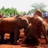 Sheldrick Elephant Orphanage 30