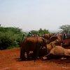 Sheldrick Elephant Orphanage 32