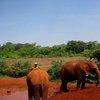 Sheldrick Elephant Orphanage 36