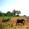 Sheldrick Elephant Orphanage 21
