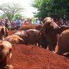 Sheldrick Elephant Orphanage 33