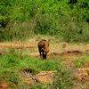 Sheldrick Elephant Orphanage 22