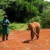Sheldrick Elephant Orphanage 28