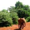 Sheldrick Elephant Orphanage 27