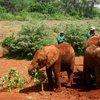 Sheldrick Elephant Orphanage 38