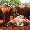 Sheldrick Elephant Orphanage 34