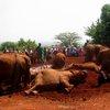 Sheldrick Elephant Orphanage 31
