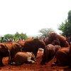 Sheldrick Elephant Orphanage 35