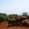 Sheldrick Elephant Orphanage 29