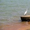 Lake Victoria 24