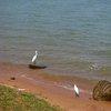 Lake Victoria 27