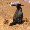 Lake Victoria 31
