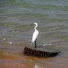 Lake Victoria 28