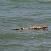 Lake Victoria 36