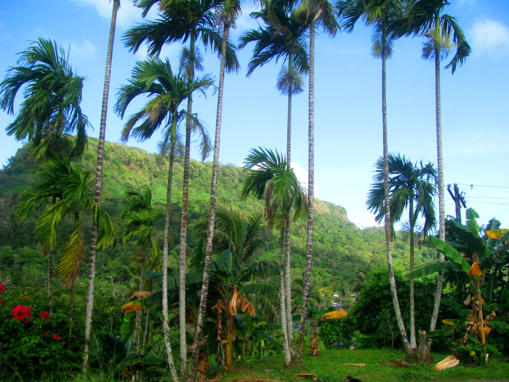Pohnpei, Federated States of Micronesia, February 2016