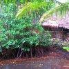 Nihco marine park & resort 49.JPG