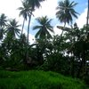 Nan Madol 31