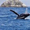 Kenai whales