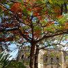 Стоун Таун - Коледно дърво и старата крепост