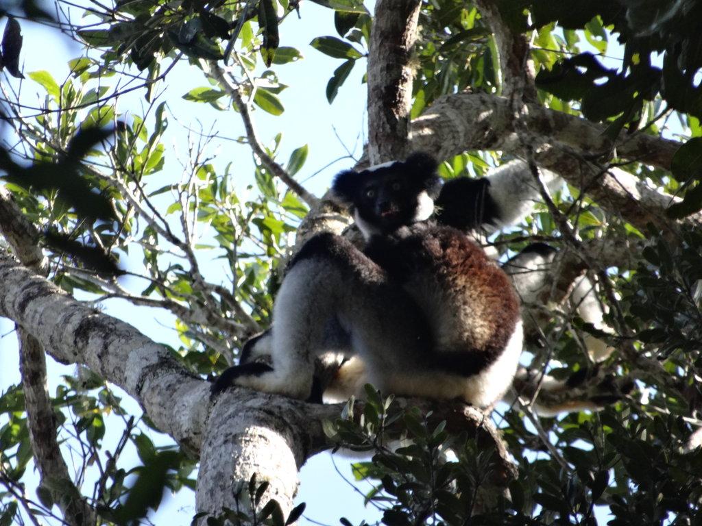 Мадагаскар 2016