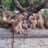 monkeys Dambulla cave temple