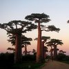 Avenue Of The Baobabs 48