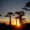 Avenue Of The Baobabs 46