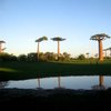 Avenue Of The Baobabs 39