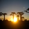 Avenue Of The Baobabs 44