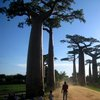 Avenue Of The Baobabs 35