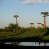 Avenue Of The Baobabs 38