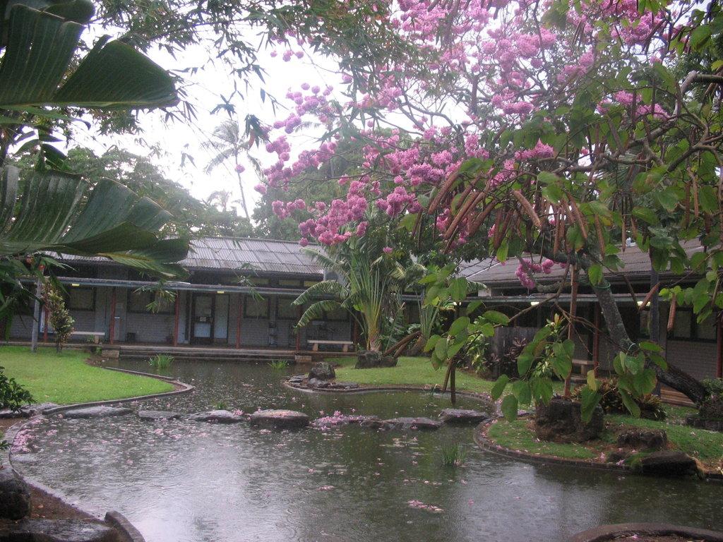 Хонолулу, Хаваи, февруари 2008