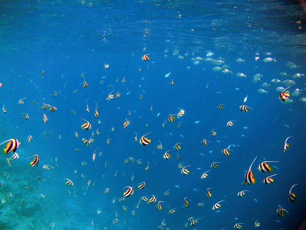 Подводен свят - Малдивите