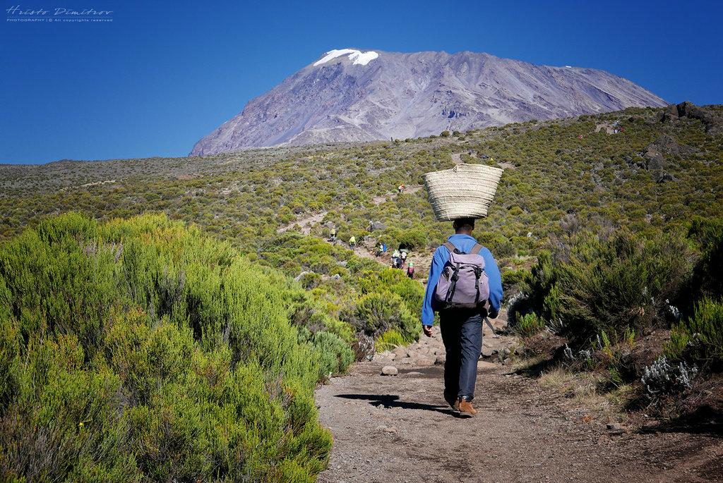 Kilimajaro