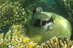Japanese Gardens coral reef, Aqaba, Jordan