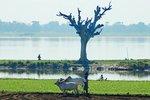 Taung Tha Man Lake, Amarapura, Mandalay region, Myanmar