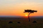 Sunrise in the African Savannah