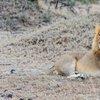 Ol Kinyei private conservancy, Masai Mara ecosystem